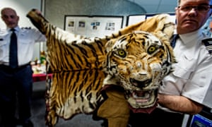 Border Force staff at Heathrow hold up a tiger skin seized from traffickers.