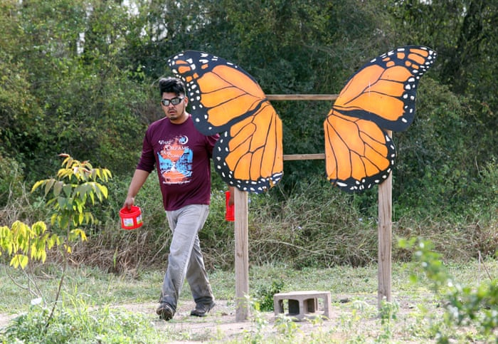 Death sentence': butterfly sanctuary to be bulldozed for