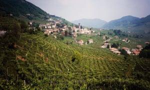 Prosecco vineyards in Veneto.