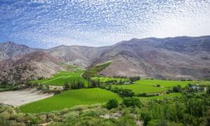 Vineyards in the Valle del Elqui, Vicuna, Region de Coquimbo, Chile