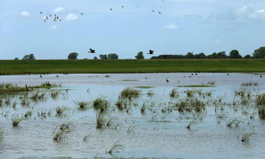 A soy field near Pergamino, Argentina. Photograph: Alamy