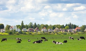 Farmland with cows in the Netherlands
