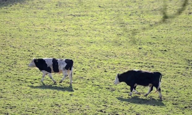 theguardian.com - BSE case found on Aberdeenshire farm