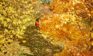 A child near an acer tree at Emmetts Garden