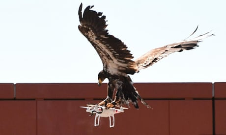 Eagles v drones: Dutch police to take on rogue aircraft with flying squad