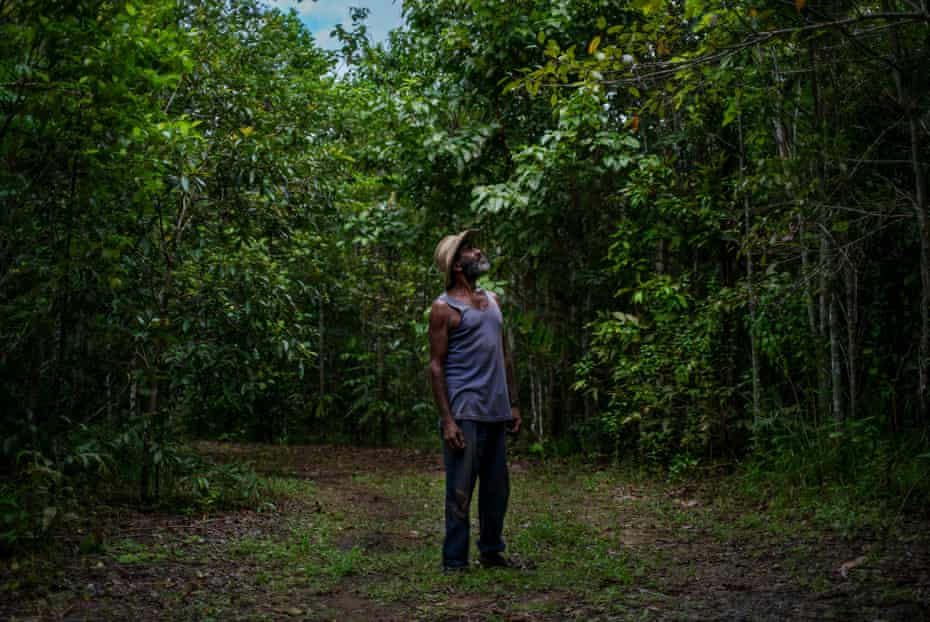 Andrew Solomon, a traditional owner of 'Lot 46', which was regenerated by Rainforest Rescue over a ten year period, looks up at the regenerated rainforest habitat on his land.