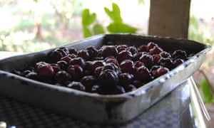 Some of the fruit grown at Mario Lago