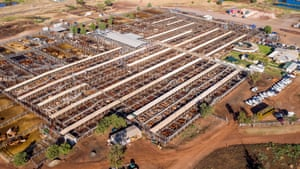 Roma saleyards: the biggest cattle selling complex in the southern hemisphere. Twice-weekly sales take place with buyers and sellers from all over Queensland and Australia.