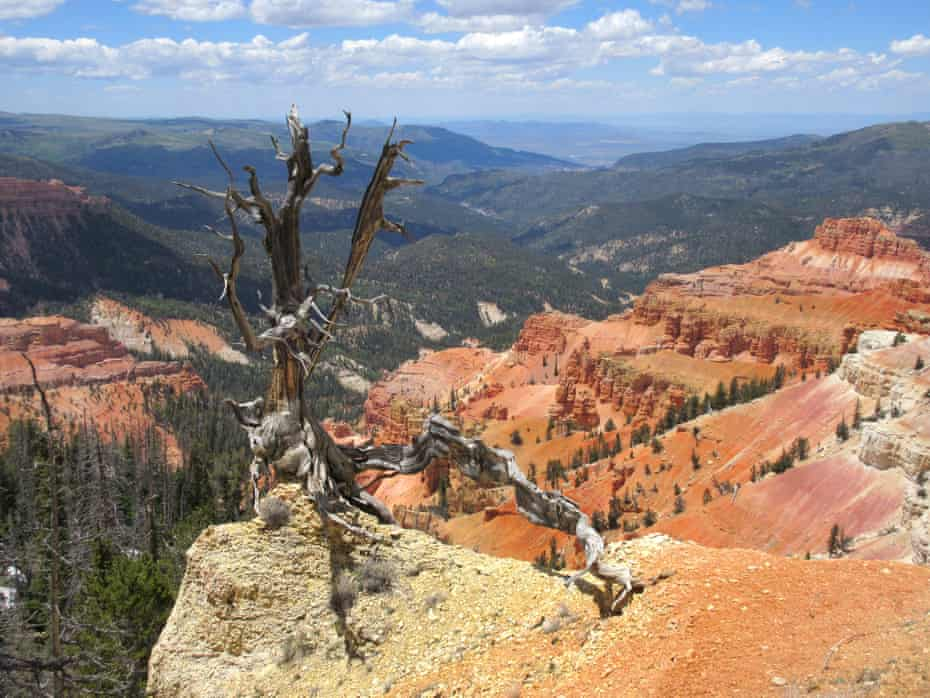 The amphitheater at Cedar Breaks national monument in summer