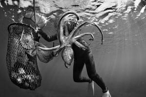 A Haenyeo woman nets a large octopus, South Korea