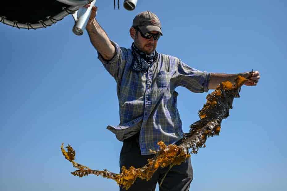 Sean Barrett, the founder of Montauk Seaweed Supply Company, holds freshly harvested sugar kelp.