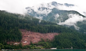 Logging near Bella Coola, in the Great Bear Rainforest, British Columbia, Canada.