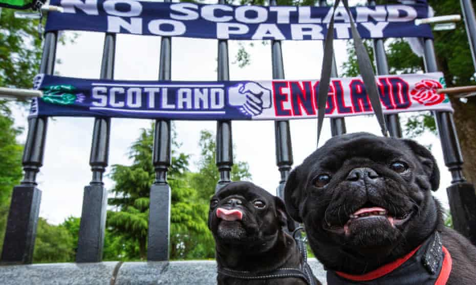 Thomas Walker's pugs Minnie and Mia. He was one of many fans saying the football was lifting Scottish spirits.