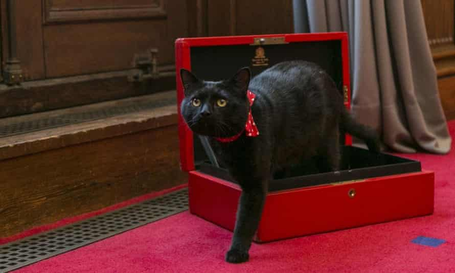 Gladstone, the Treasury cat
