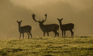 Deer on the Knepp Castle estate, West Sussex.