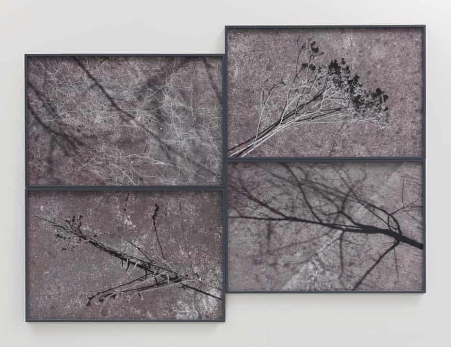 Willie Doherty. Ashen, Restless, 2018 Quadriptych, framed pigment print mounted on Dibond 53 1/2 × 79 3/5 in 136 × 202.2 cm.
