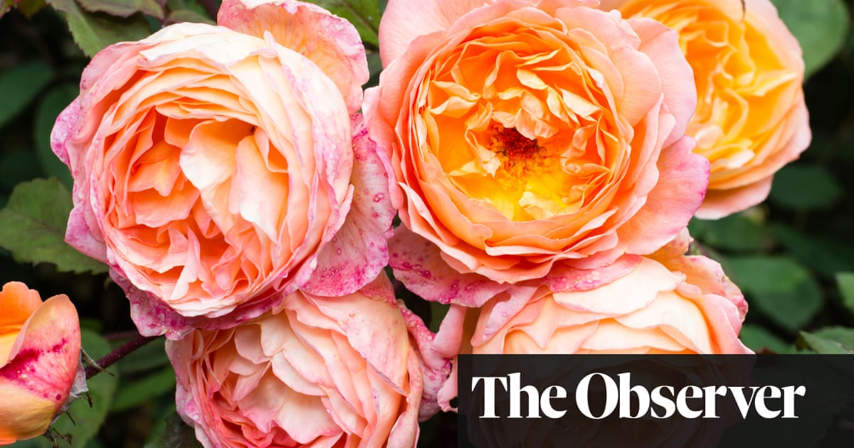 Gardens Not All Roses Smell Like Roses James Wong Life And
