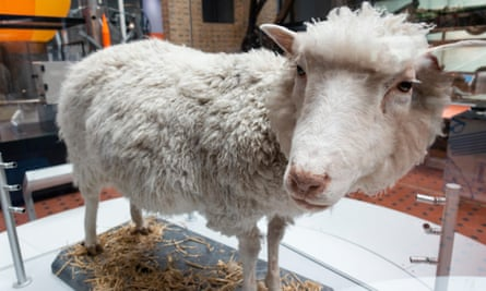 Dolly the Sheep on display at National Museum of Scotland in Edinburgh