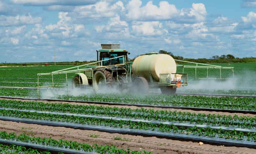 Agriculture - Chemical application of fungicide and insecticide on Bell pepper plants / Florida, USA.<br>BYPAN3 Agriculture - Chemical application of fungicide and insecticide on Bell pepper plants / Florida, USA.