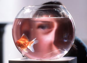Person looking at a goldfish in a bowl.