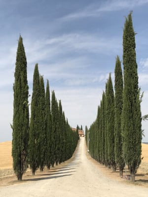 First Place in trees – a road in the Tuscan countryside near Pienza and Montalcino, Italy. Shot on iPhone 7 Plus.