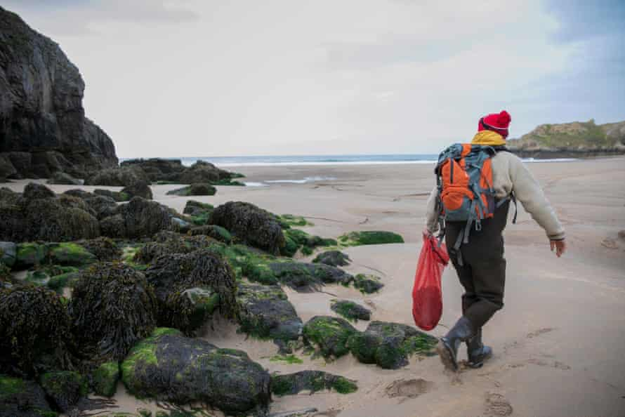 The low tide exposes laver and other seaweeds that Williams gathers sustainably.