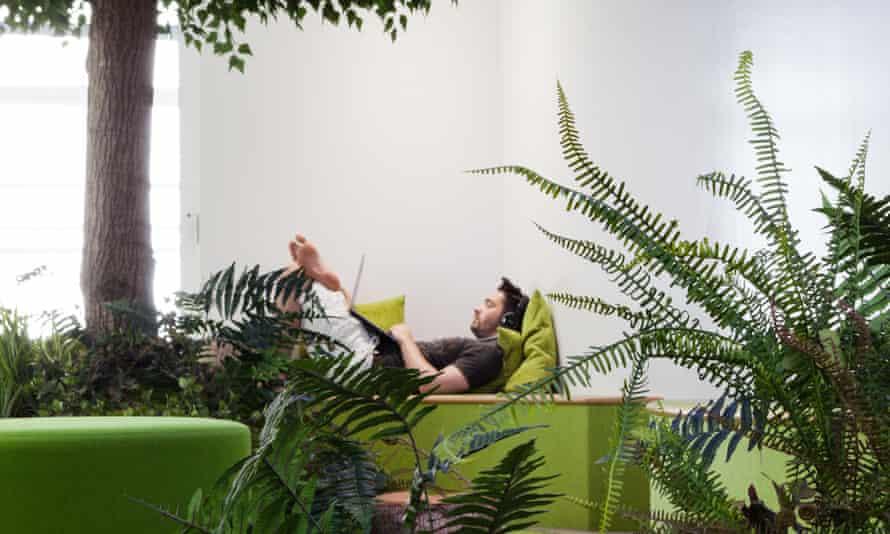 The botanical meditation room at media firm Essence.