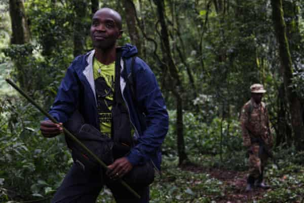 Fred Nizeyimana carries a camouflaged blowdart gun in case he needs to anaesthetise an injured primate, Uganda.