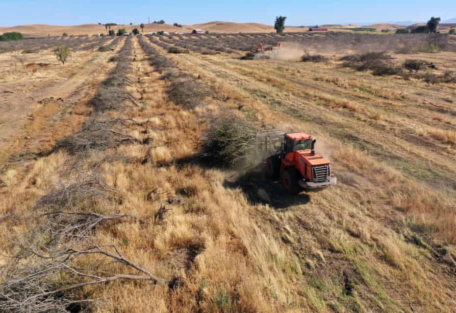 Le département californien des ressources en eau a réduit l'allocation d'eau pour les agriculteurs et les producteurs, ce qui a conduit beaucoup d'entre eux à supprimer les cultures dépendantes de l'eau.
