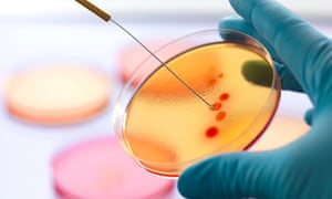 As the rate of antibiotic use increases, so too does the rise and hazard of resistant bacteria strains.