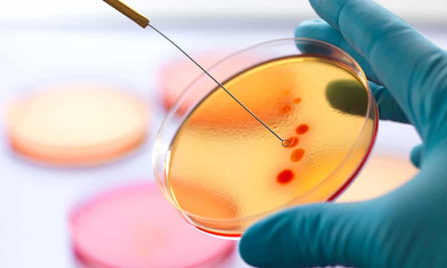 Bacteria in microbiology lab