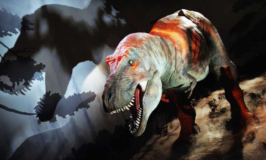 Well preserved T rex fossils have revealed new insights into the dinosaurs' sex lives.