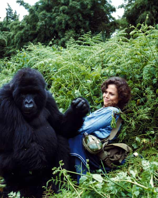 Sigourney Weaver in Gorillas in the Mist, 1988, directed by Michael Apted. Many of his feature films focused on female achievement.