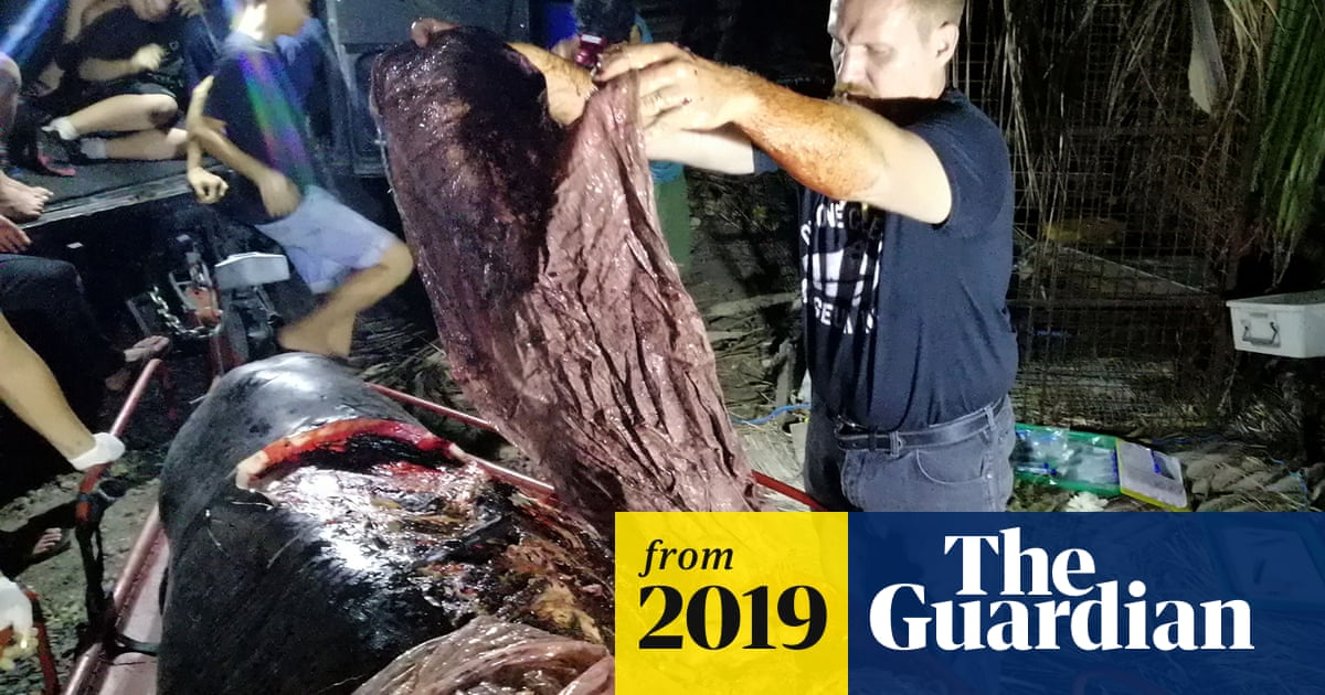 Shocking autopsy photos show toll of plastic waste on dead whale