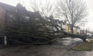 A tree that fell on to a house in Aigburth, Liverpool