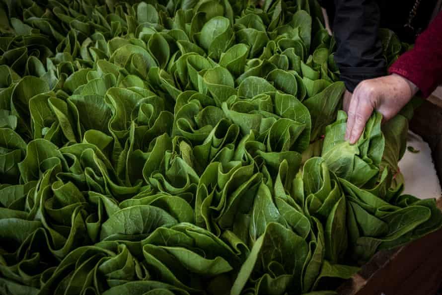 Lettuce on offer at Foodbank