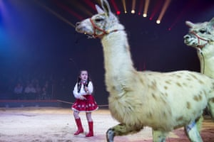 Rapperswil, SwitzerlandChanel Marie Knie performs her llama act during the final rehearsal of Circus Knie.