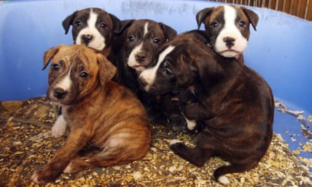 Puppies seized by police in a house in Catford, south-east London.