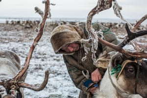 For thousands of years indigenous Nenets people have led nomadic lifestyles. The Khudi family is one of 12,000 Nenets still migrating along the same routes as their ancestors did. But climate change is affecting weather conditions: two years ago thousands of reindeer died of starvation when rain in the middle of February turned the tundra into a sheet of ice and the herd couldn't dig to get lichen