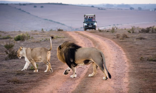 theguardian.com - The world needs wildlife tourism. But that won't work without wildlife