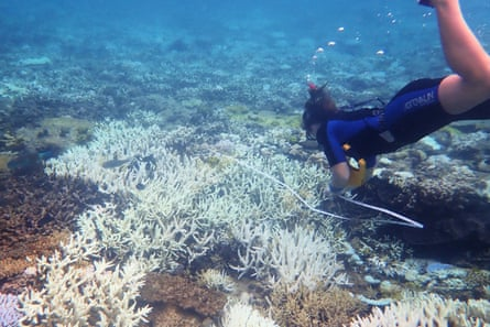 Coral bleaching at Heron Island.