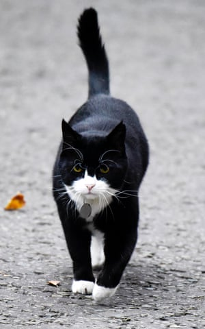 One of Steve's legendary pictures of Palmerston the cat.
