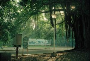 Tree Lamp Signs, Havana, Cuba 1993