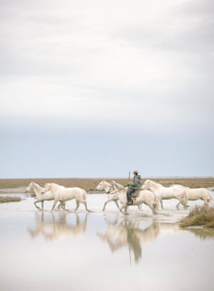 Wild horses in the Camargue, western Europe's biggest river delta, in France in April 2018