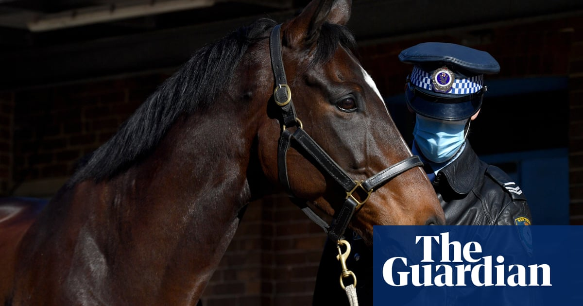 Protestor who allegedly punched police horse at Sydney rally refuses Covid test in custody, court told