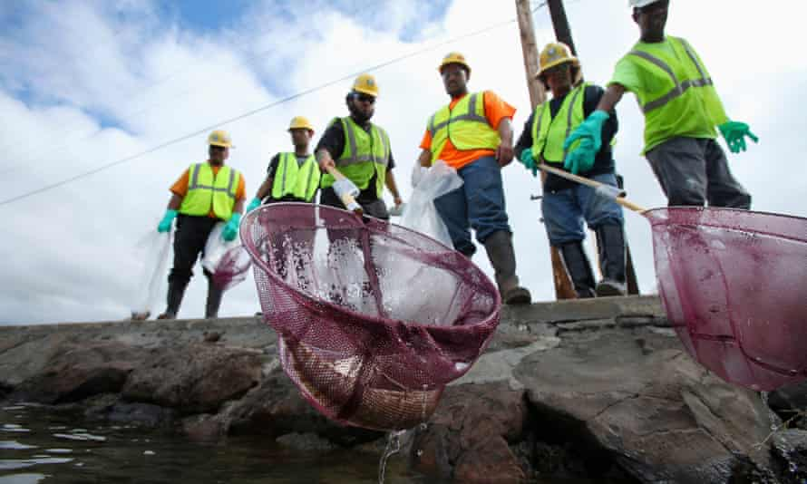 An environmental cleanup crew scoops a dead eel out of Keehi Lagoon in Honolulu, Hawaiiafter a massive molasses spill from a Matson cargo ship.