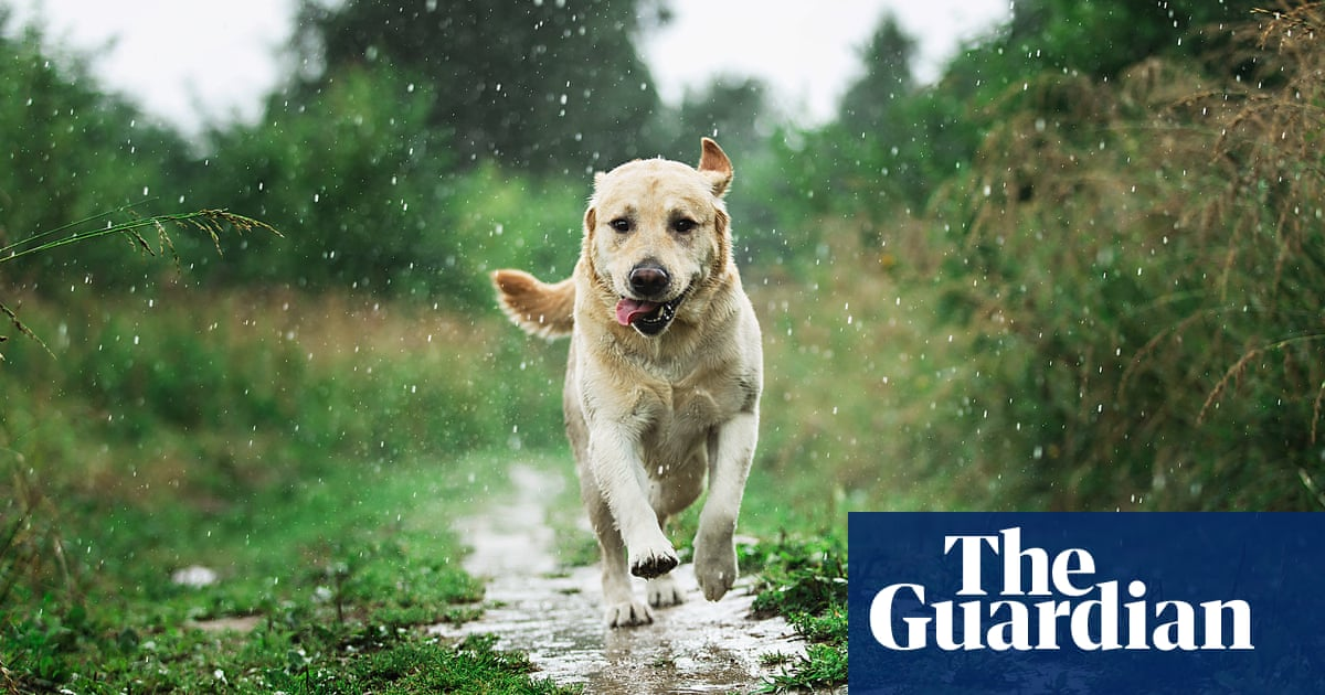 How can you prevent dogs jumping at children? How should I respond when it happens?