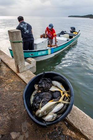 Fisherman unload the night catch at the docks of the Punta Gorda market.