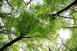 向上看到林地树冠与成熟的叶子。