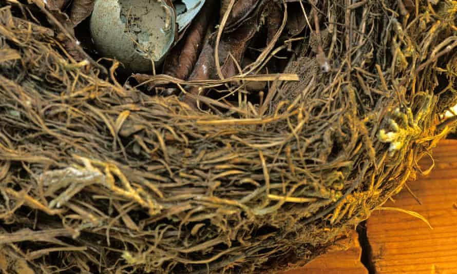 A nest containing a broken eggshell
